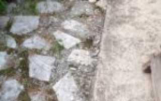 Позеленела бетонная отмостка что делать