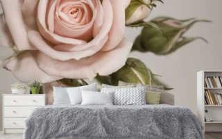 Одуванчик фотообои в интерьере – как украсить свои дом