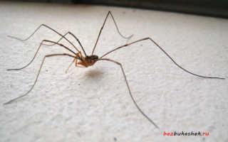 Как избавиться от пауков из дома? Простые и эффективные способы избавиться от пауков