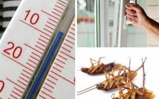 15 лучших способов избавиться от тараканов в домашних условиях быстро и навсегда